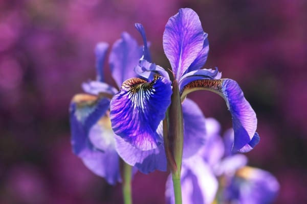Iris. If you truly love nature…