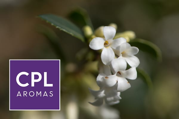 CPL Aromas Launches Osmanthus Fusion